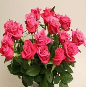 Roses Cerice