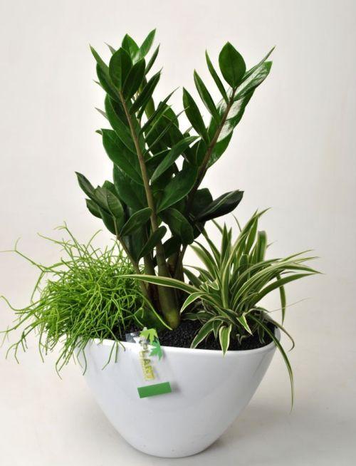 PLANTS MIX INDOOR