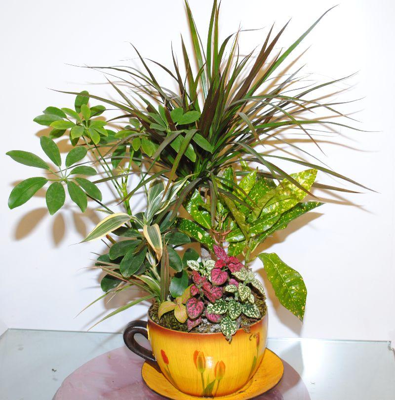 Mix Indoor Plants 4