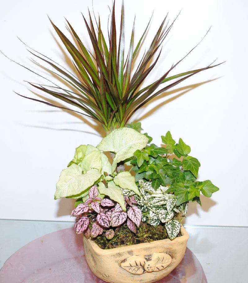 Mix Indoor Plants 2