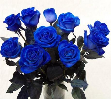 Roses Blue