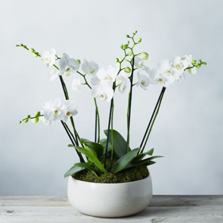 Orchids for Ever