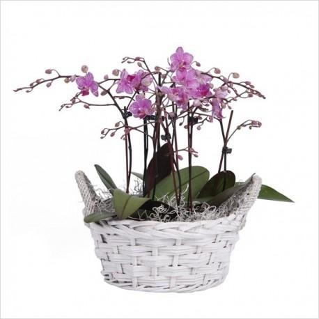Basket Of Orchids Nana