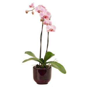 Plant orchids