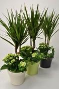 Mix Indoor Plants