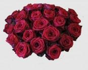 Roses Red Naomi